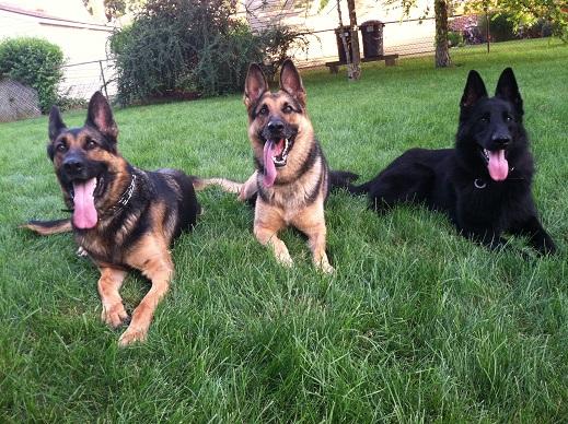 Dog Kennels Lincoln